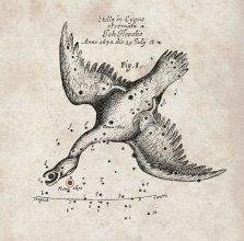Gwiazdozbiór Łabędzia i Nova Vulpeculae 1670 (Heweliusz)